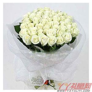 西安高新送花33朵白玫瑰(清晨之恋)
