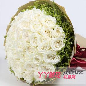 33朵白玫瑰鲜花速递(莲的梦)