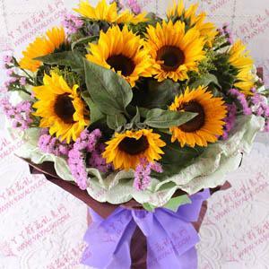 鲜花10支观赏向日葵