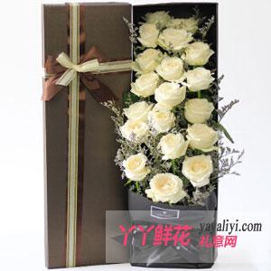 鲜花19支白玫瑰方形礼盒