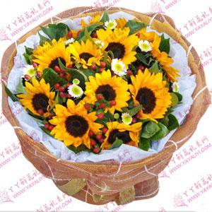 11枝向日葵鲜花束速递