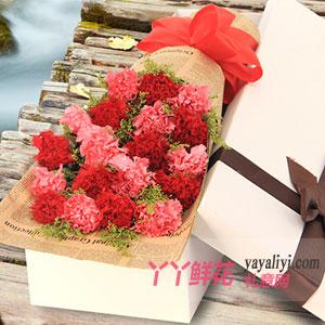 19枝双色康乃馨白色礼盒