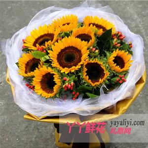 甜甜的祝福 - 鲜花9枝向日葵网上订花