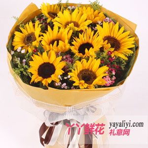 沉默的爱 - 9枝向日葵网上订花
