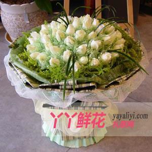 玫瑰花订购66枝白玫瑰