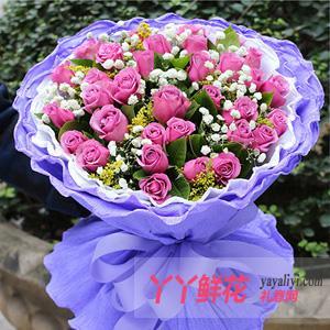 33枝紫玫瑰鲜花速递