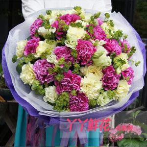 29朵混色康乃馨母亲节预定