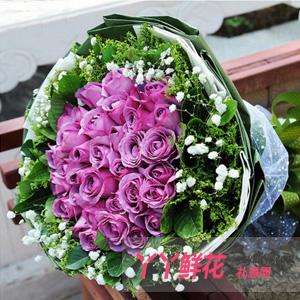 西安鲜花速递33枝紫玫瑰