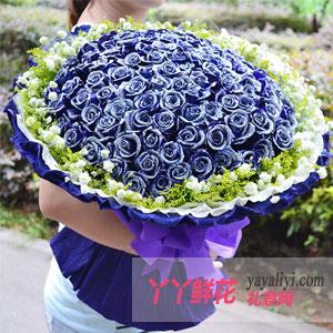 圣诞节99朵蓝玫瑰(浪漫情怀)送花