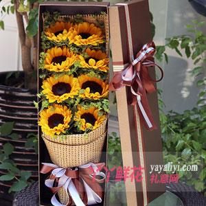 阳光灿烂 - 8朵向日葵礼盒