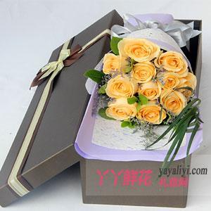 11朵香槟玫瑰水晶草礼盒