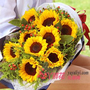 青春花开 - 9朵向日葵扇形花束