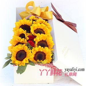 9朵向日葵2红色康乃馨礼盒