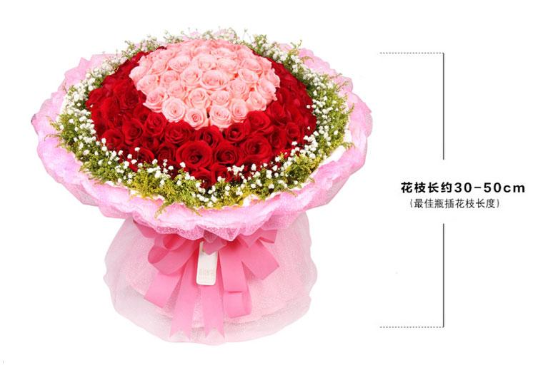 99朵玫瑰鲜花尺寸图