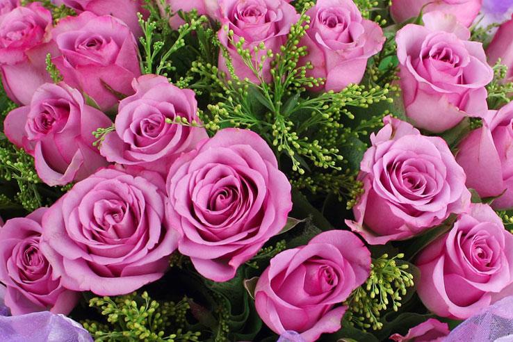 33枝紫色玫瑰细节图