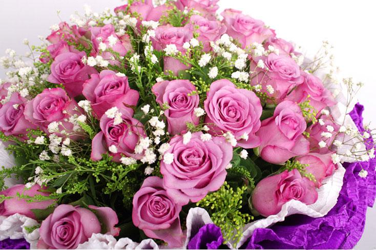 33枝紫色玫瑰恋上开花局部图