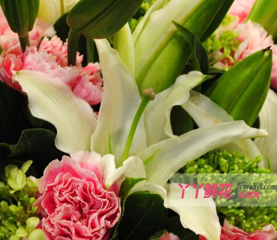 20枝粉色康乃馨细节图