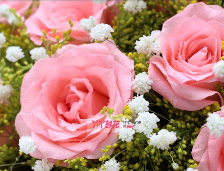 19朵粉玫瑰2只小熊细节图