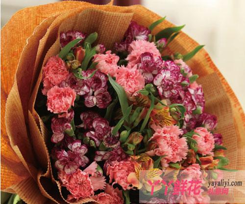 粉色康乃馨实拍图