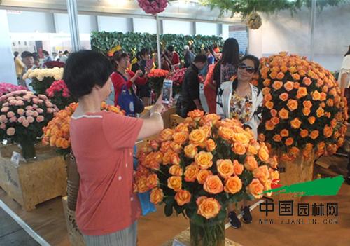 以花搭台 共谋发展 第十七届昆明国际花卉展成功举办