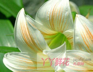 四个水仙花的传说