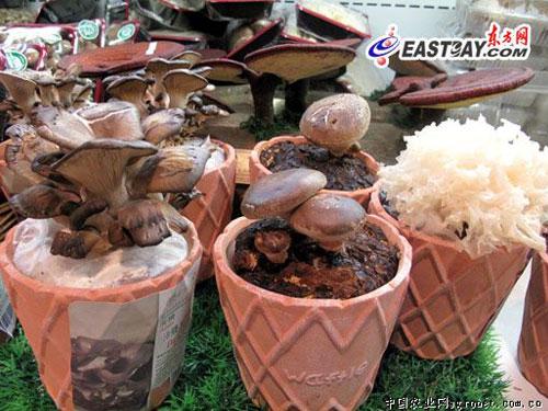 上海:28万天价盆景菌菇在沪出售 新奇但不实惠