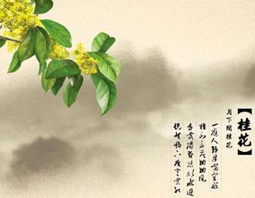 桂花的主要价值