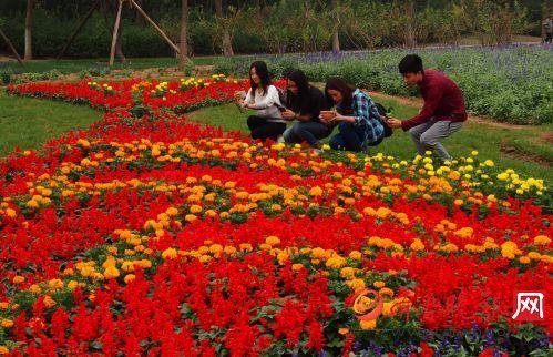 国庆节临近,济南植物园大片鲜花盛装迎宾