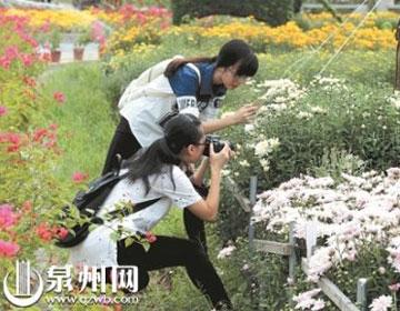 丰泽首届菊花展11月1日正式开放 内行支招如何赏菊
