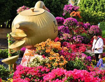 梧州市第十七届市花宝巾花展正式开幕