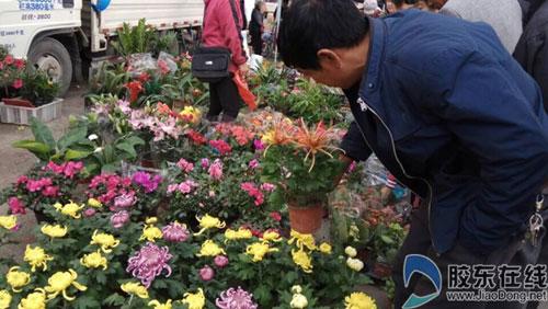 降温催热鲜花买卖 市民:看着喜欢就想买(图)
