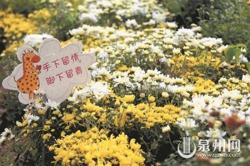 丰泽首届菊花文化节在鲜花港正式开幕