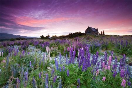 新西兰即将进入最梦幻的季节 有多美你知道吗