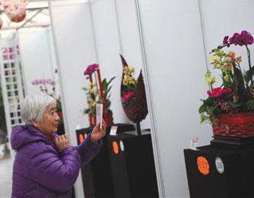 2017北京迎春年宵花展开幕