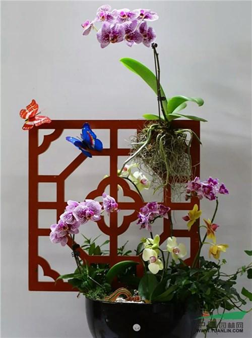 第十一届三亚国际热带兰花博览会开幕
