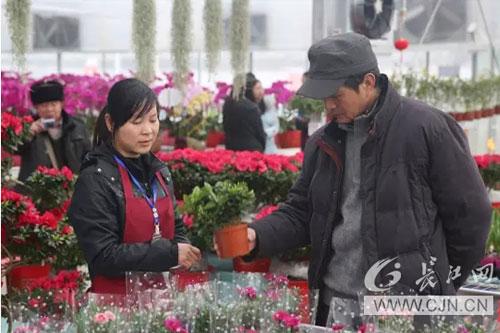 第二届武汉迎春花市百万盆花卉等你来赏购