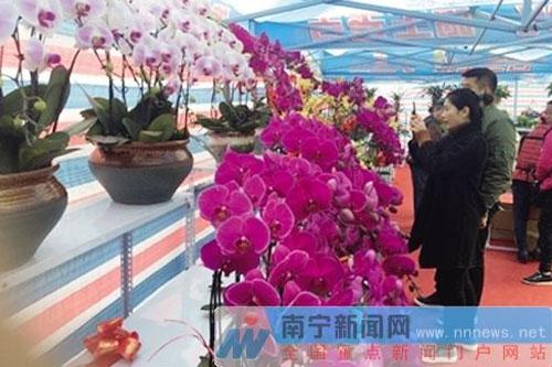 南宁迎春花市持续至26日市民争买鲜花过个美丽年