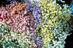 """今年情人节合肥鲜花市场主打""""进口满天星"""" 七彩玫瑰需提前预定"""