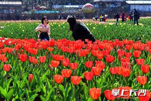 """长沙植物园最美春季花园 """"春之歌""""名花展开幕"""