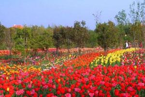 市民赏花新去处 郑州绿博园百花来闹春