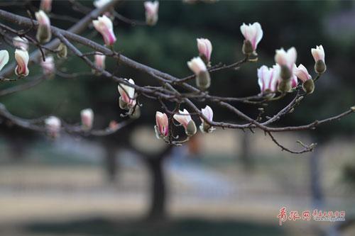 记者在青岛中山公园看到