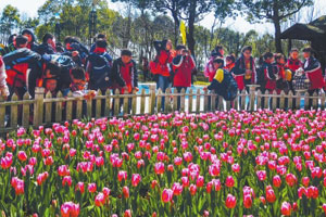 上海浦东鲜花港郁金香花展25日开幕 品种超500种