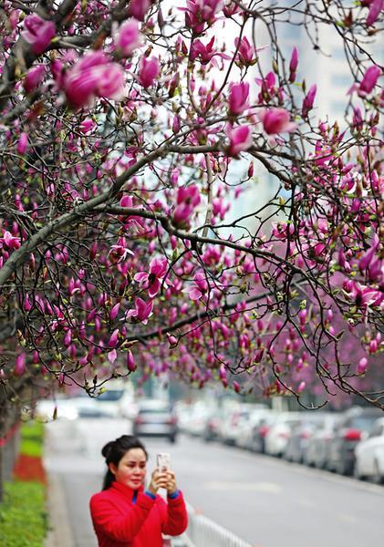 最美三月天 花重西安城