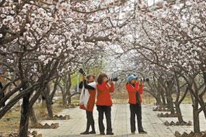 石家庄:花开竞芬芳 一派好春光