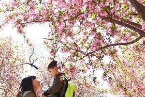 春光媚满园尽是赏花人 郑州公园吸引10万游客