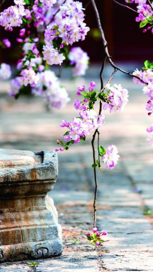 北京故宫晒出那芳华绝代的赏花图