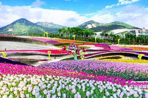 青岛:4月去世博园参加花海节 百万欧洲名贵鲜花亮相