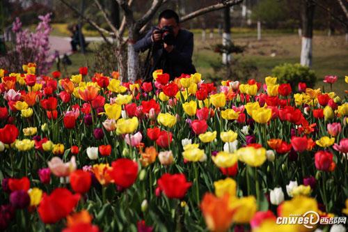 郁见春天西安植物园2017春季花展开幕