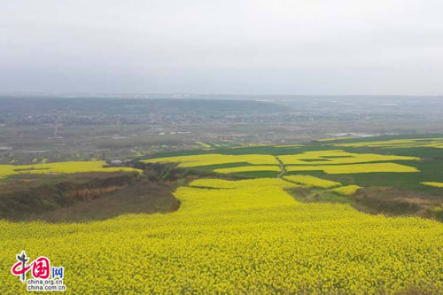 西安万亩油菜花竞相盛放 春意盎然引人入胜