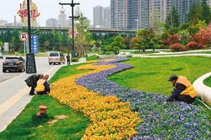 西安曲江:以鲜花迎接城市的客人